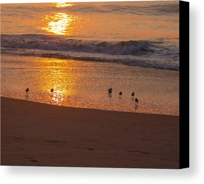 Accomack County Canvas Print featuring the photograph Sanderlings At Sunrise by Scott Bush