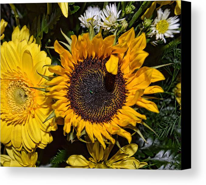 Sunflower Canvas Print featuring the photograph Sunflowers by Mark Orr