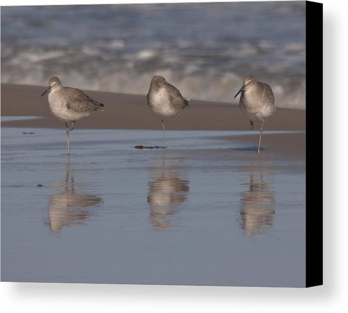 Accomack County Canvas Print featuring the photograph Three's Company by Scott Bush