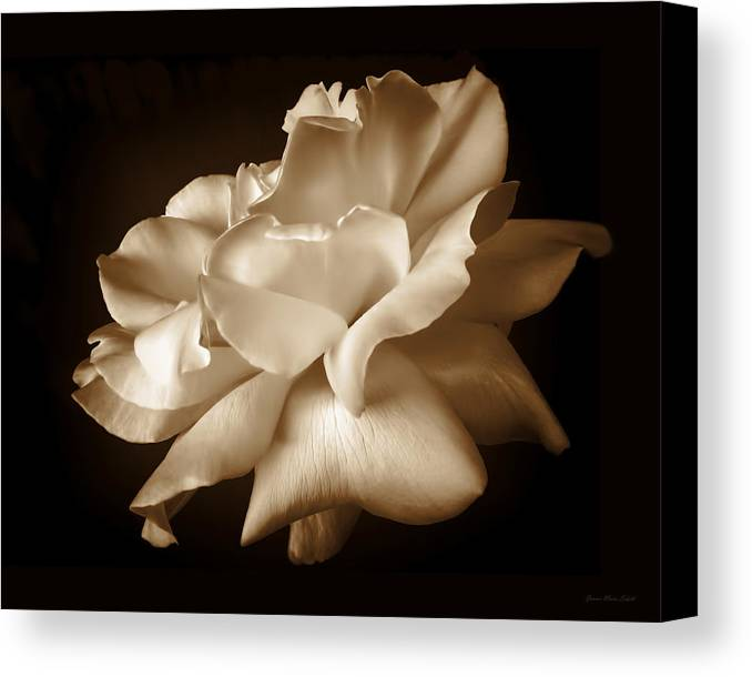 Rose Canvas Print featuring the photograph Umber Rose Floral Petals by Jennie Marie Schell