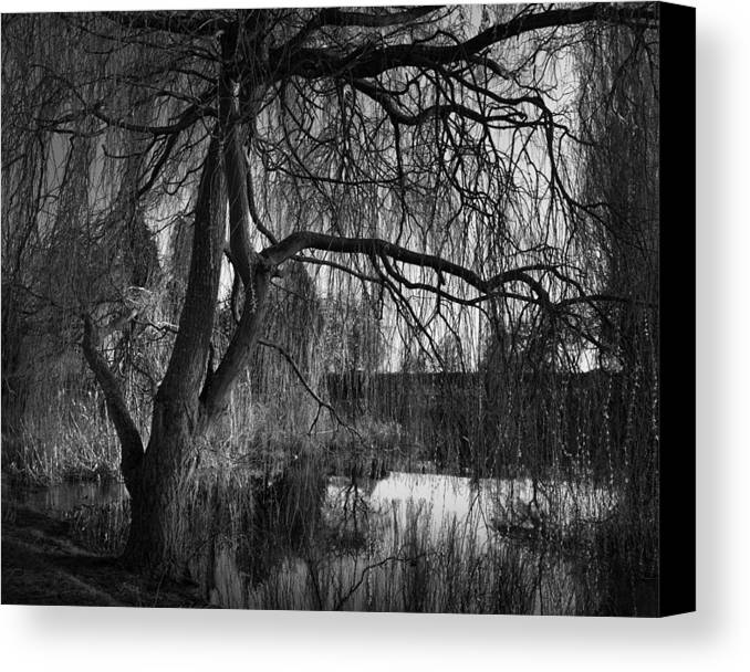 Willow Canvas Print featuring the photograph Weeping Willow Tree by Ian Barber