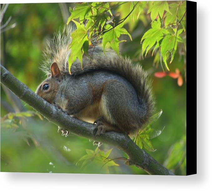 Nature Canvas Print featuring the photograph Squirrel Dinner by Valia Bradshaw