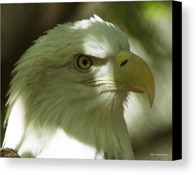 Eagle Canvas Print featuring the photograph Bald Eagle by DiDi Higginbotham