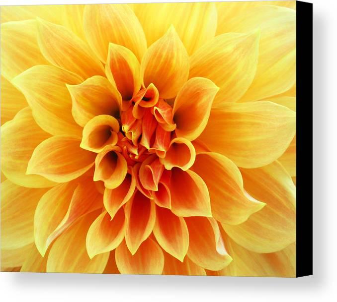 Flower Canvas Print featuring the photograph Dahliaburst by Craig Levin