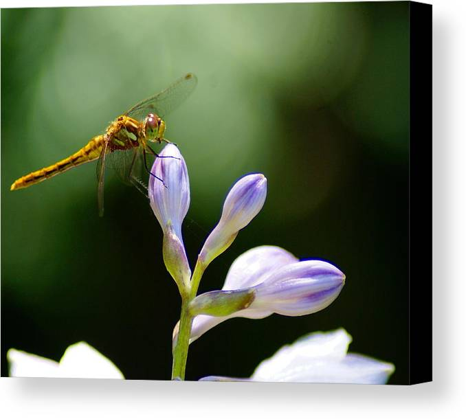 Dragonflies Canvas Print featuring the photograph Enjoying The Moments Of The Day by Ben Upham III