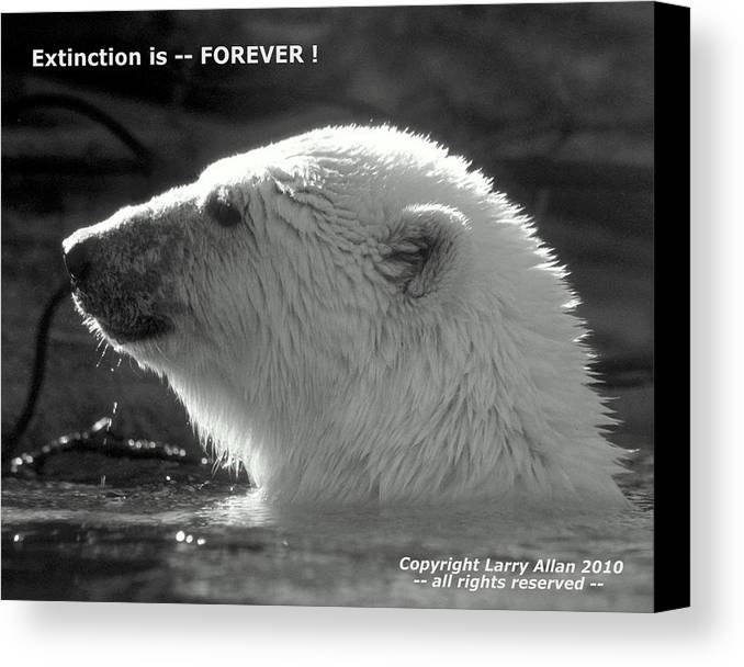 Polar Bear Canvas Print featuring the photograph Extinction Is Forever by Larry Allan
