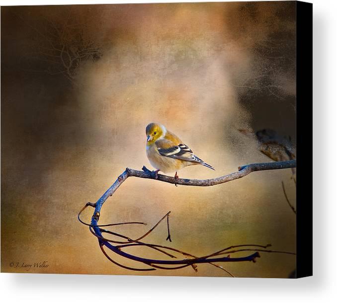 J Larry Walker Canvas Print featuring the digital art Goldfinch In Deep Thought by J Larry Walker