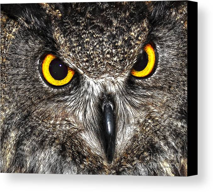 Diane Berry Canvas Print featuring the drawing Great Horned Owl by Diane E Berry