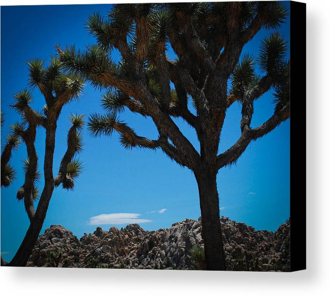 National Canvas Print featuring the photograph Joshua Tree 1 by Regis Keddie