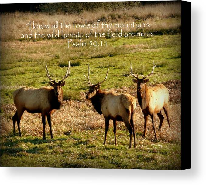 Cindy Canvas Print featuring the photograph Magnificent Bull Elk Psalm 50 by Cindy Wright