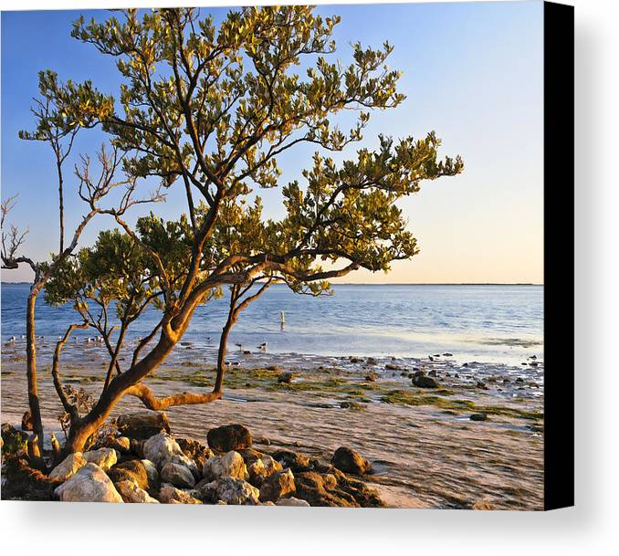 Florida Landscapes Canvas Print featuring the photograph Morning Light At Sunset Park by Betty Eich