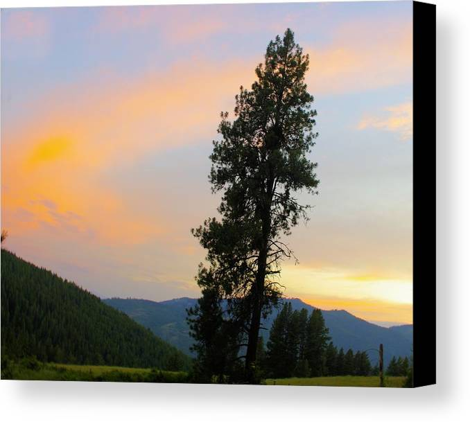 Pine Canvas Print featuring the photograph Pine And A Painted Sky by John Greaves