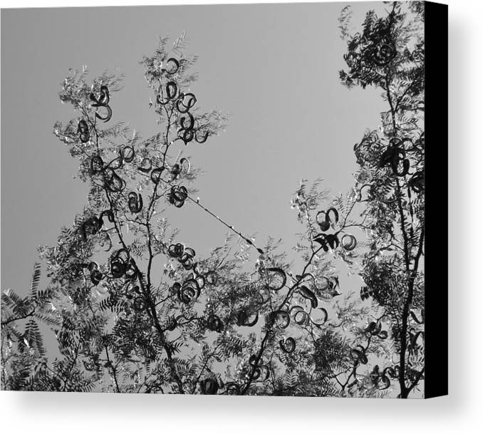 Ringlets Canvas Print featuring the photograph Ringlets Bw by Elizabeth Sullivan