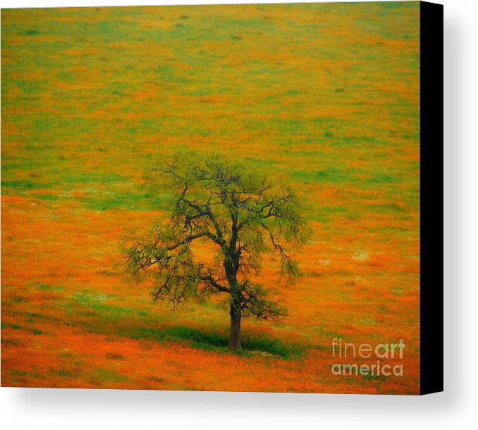 Single Canvas Print featuring the photograph Single Tree by Susanne Van Hulst