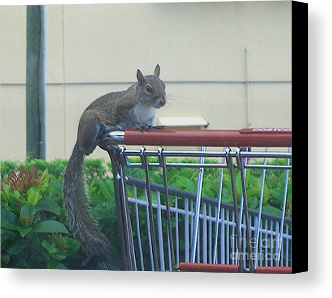 Squirrel Canvas Print featuring the photograph Squirrel Going Shopping by Merton Allen