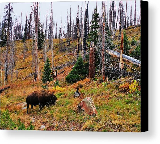 Animal Canvas Print featuring the photograph Western Icon by Benjamin Yeager