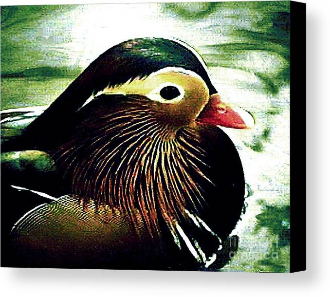 Duck Canvas Print featuring the photograph Wood Duck by Merton Allen