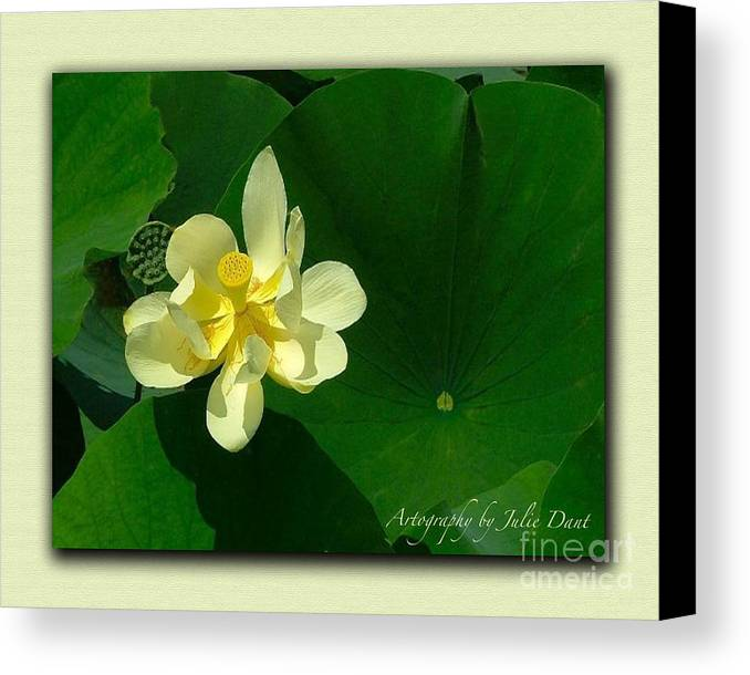 Flowers Canvas Print featuring the photograph Yellow Lotus Blossom In Mississippi by Julie Dant