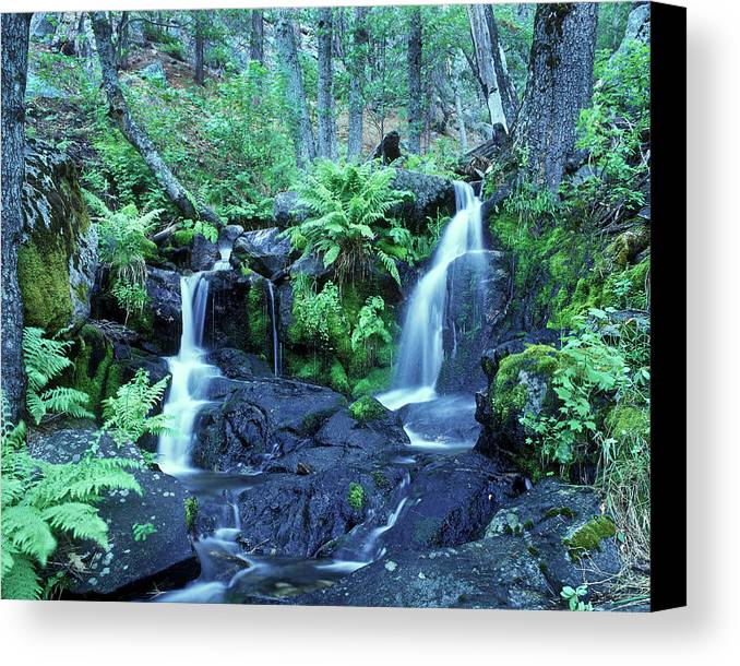 Landscape Canvas Print featuring the photograph Cascade Creek And Ferns by Joe Palermo