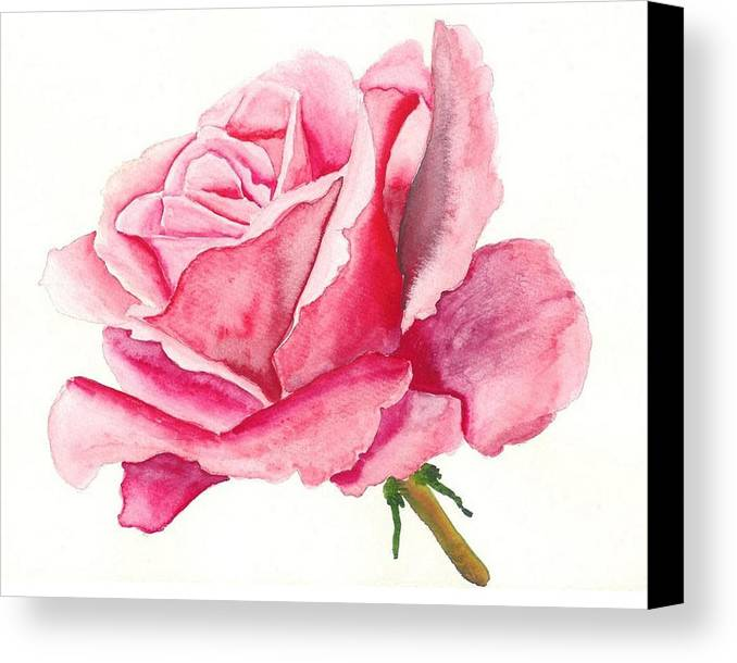 Pink Rose Canvas Print featuring the painting Pink Rose by Robert Thomaston