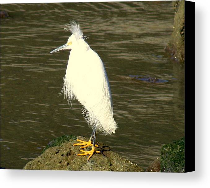 Nature Canvas Print featuring the photograph Bad Hair Day by Kerry Reed