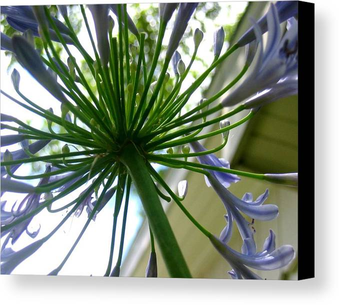 Photograph Canvas Print featuring the photograph Blossom Explosion by Lindsey Orlando