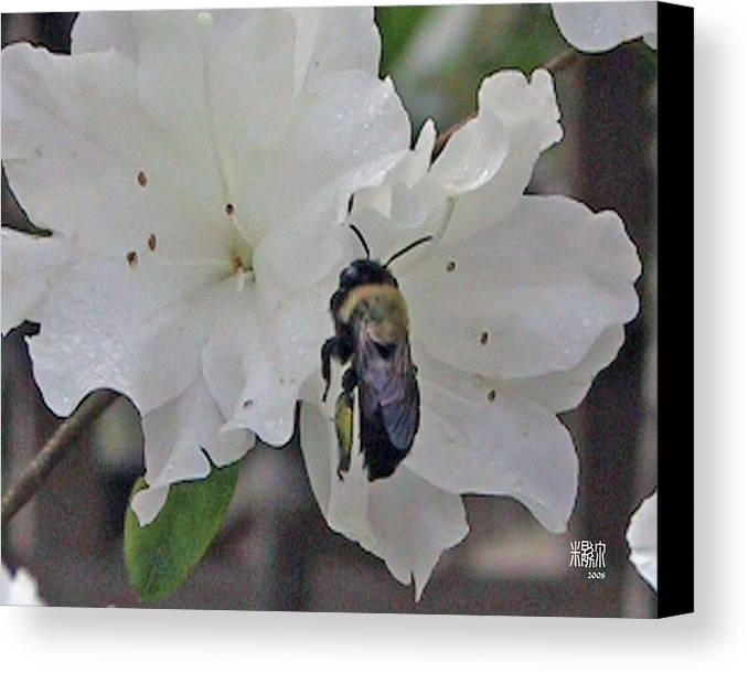 Flowers Canvas Print featuring the photograph Busy Bee by Michele Caporaso