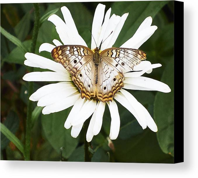 Butterfly Canvas Print featuring the photograph Butterfly And Flower by Steve Ondrus