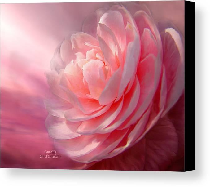 Camellia Canvas Print featuring the mixed media Camellia by Carol Cavalaris