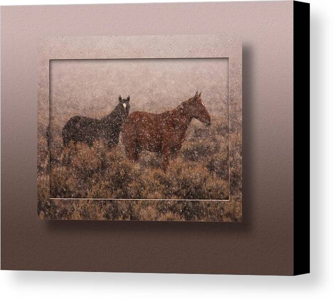 Wild Horses Canvas Print featuring the photograph Cold And Blowing Snow by Marilyn Gregory