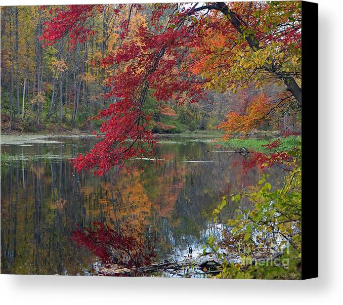 Nature Canvas Print featuring the photograph Cooper Mill Pond by Robert Pilkington