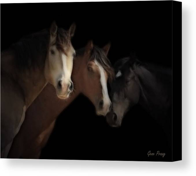 Mustang Canvas Print featuring the photograph Desert Ghosts by Gene Praag