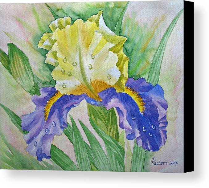 Flowers Canvas Print featuring the painting Dew Drops Upon Iris.2007 by Natalia Piacheva