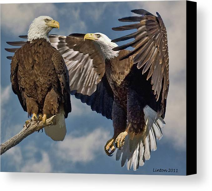 American Bald Eagle Canvas Print featuring the photograph Eagle Pair 3 by Larry Linton