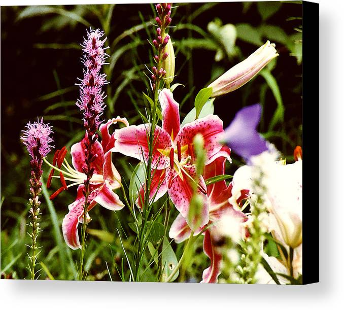 Flowers Canvas Print featuring the photograph Fancy Lilies In Garden by Roger Soule