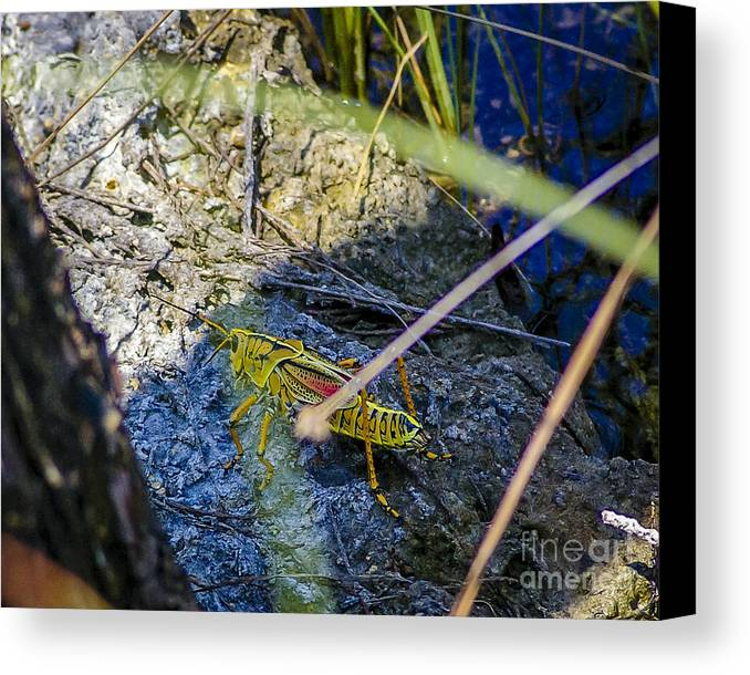 Grasshopper Canvas Print featuring the photograph Grasshopper by Nancy L Marshall