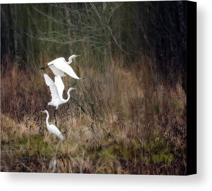 Bird Canvas Print featuring the photograph Great Egrets by Al Mueller