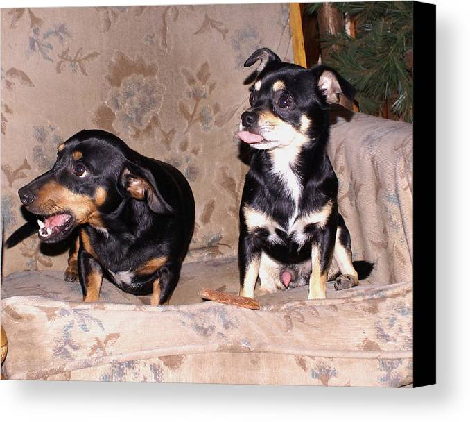 Dogs Canvas Print featuring the photograph He's All Mine by Debbie May