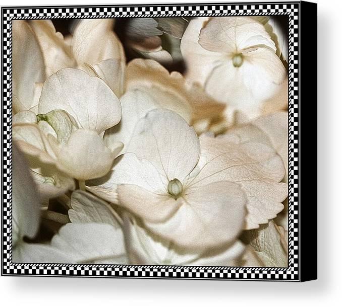 Hydrangea Canvas Print featuring the photograph Hydrangea Blossom Framed by Andrea Lazar
