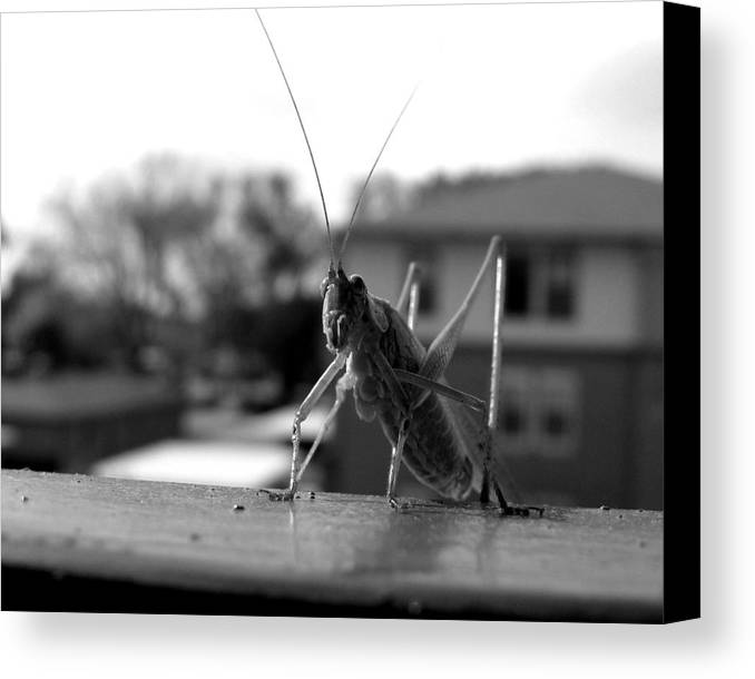 Photograph Canvas Print featuring the photograph Jumper by Lindsey Orlando
