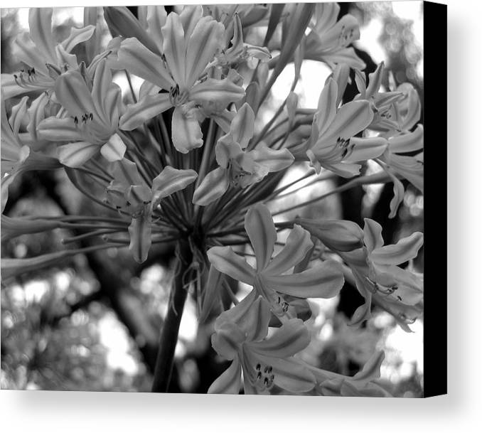 Photograph Canvas Print featuring the photograph Lily And The Trees by Lindsey Orlando