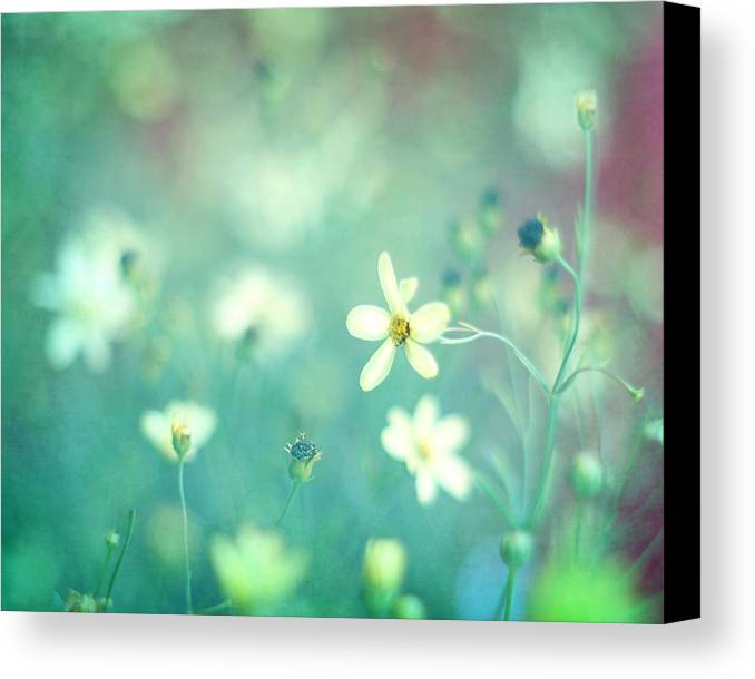 Small White Flowers Canvas Print featuring the photograph Lovestruck by Amy Tyler