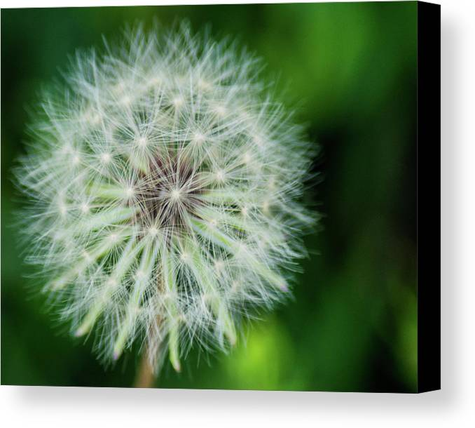 Make A Wish Canvas Print featuring the photograph Make A Wish by Brian Thomas