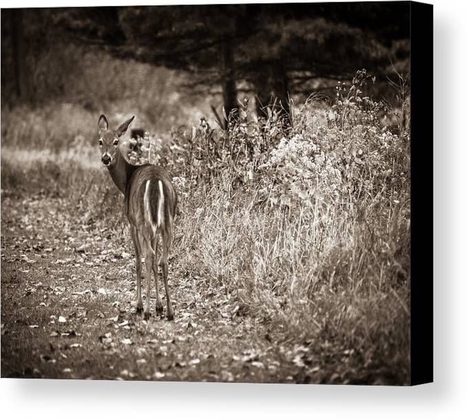 Bordeleau Canvas Print featuring the photograph My Good Side by Chris Bordeleau