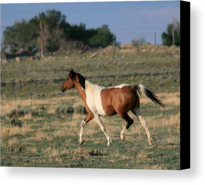 Pony Canvas Print featuring the photograph Nellie by George Jones