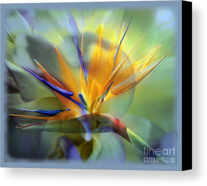 Flower Canvas Print featuring the photograph Paradise Found by Chuck Brittenham
