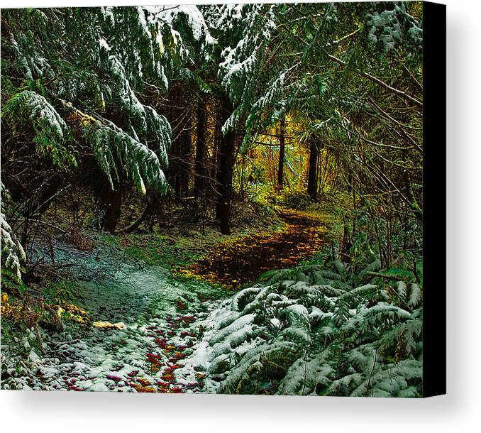 Woods Canvas Print featuring the photograph Path To The Light by Wilbur Young