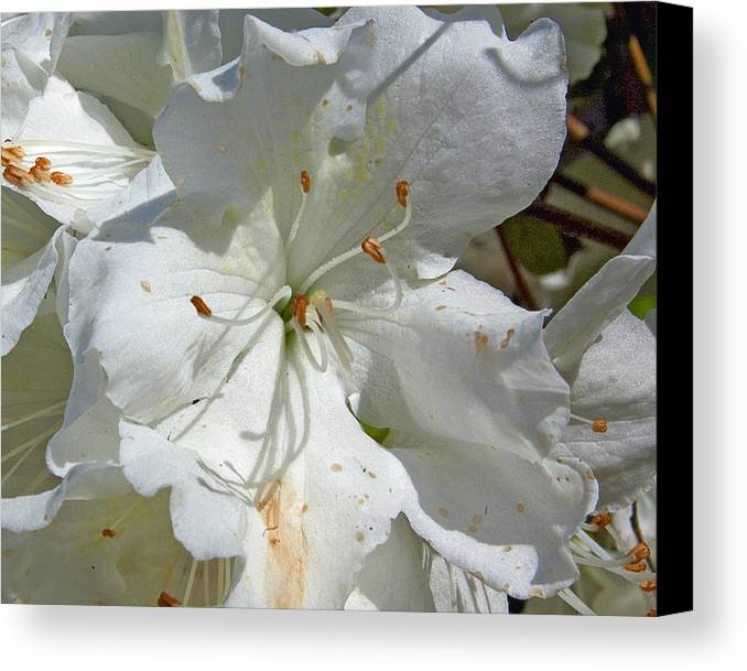 Flower Canvas Print featuring the photograph Pretty In White by Gary Adkins