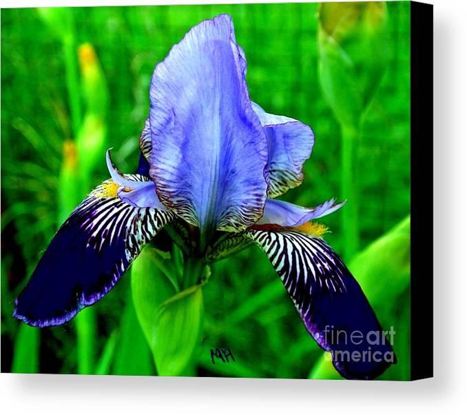 Photo Canvas Print featuring the photograph Purple Coated Iris by Marsha Heiken