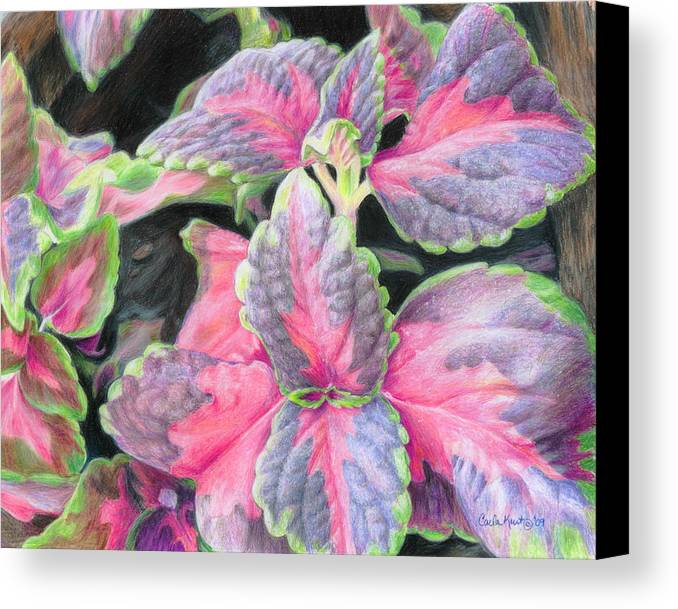 Purple Canvas Print featuring the drawing Purple Flowering Plant by Carla Kurt